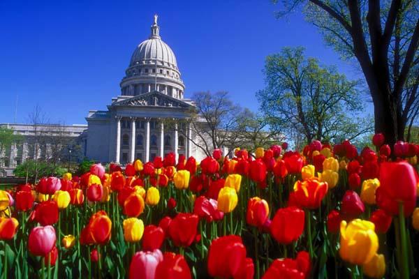 Capitol_tulips94_10
